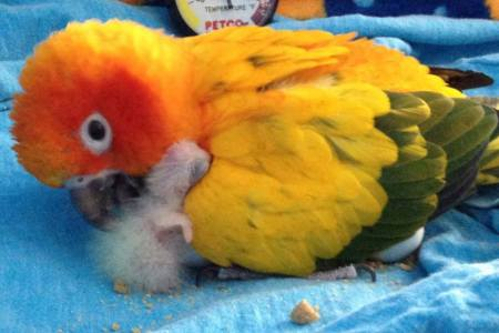 Parrot_with_baby