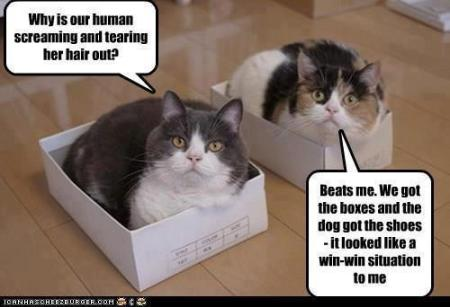 Cat_Box_Shoes